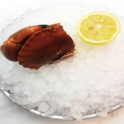 restaurant fruits de mer toulouse, tourteau